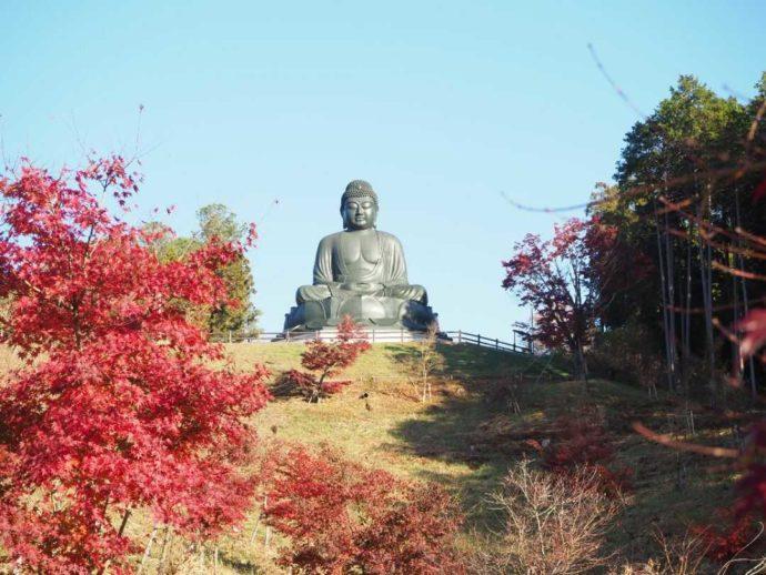 秋の寳光寺 鹿野大佛の美しい紅葉