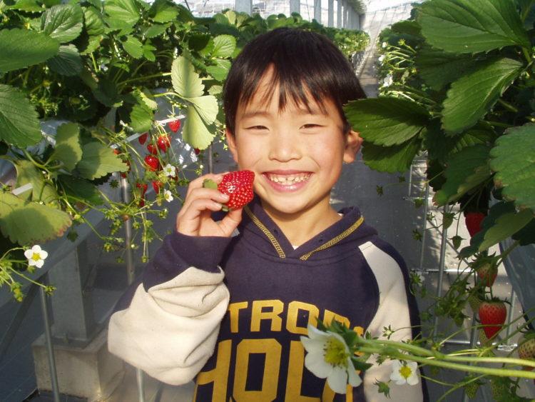 苺の里の来園者について