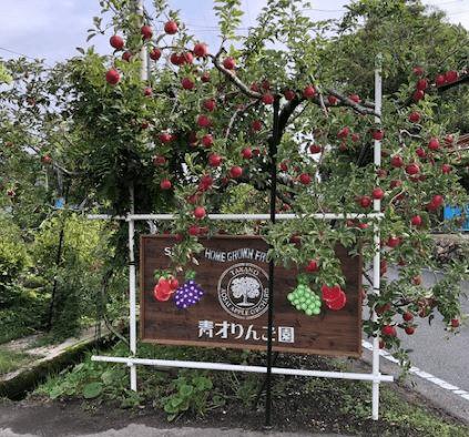 広島県庄原市でりんご狩りができる青才りんご園