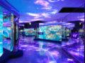 青の世界!のとじま水族館デート&周辺スポットも楽しめるプランを紹介します