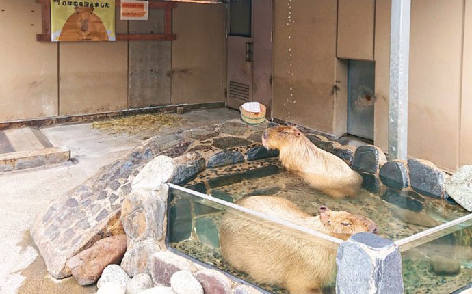 いしかわ動物園のデートプラン