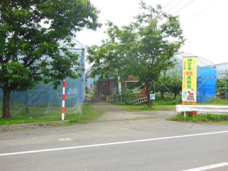 神宮寺観光果樹園のくだもの狩り・野菜狩りについて
