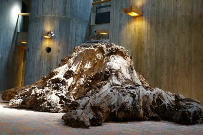 縄文時代後期のスギの大株(埋没杉)