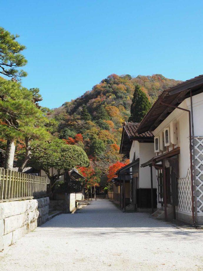 紅葉が見える櫻井家住宅付近の通り