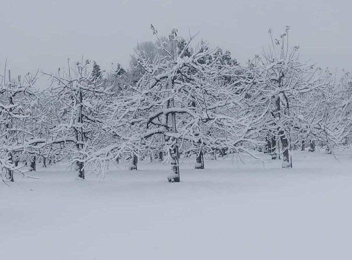 冬の加賀フルーツランド園内風景