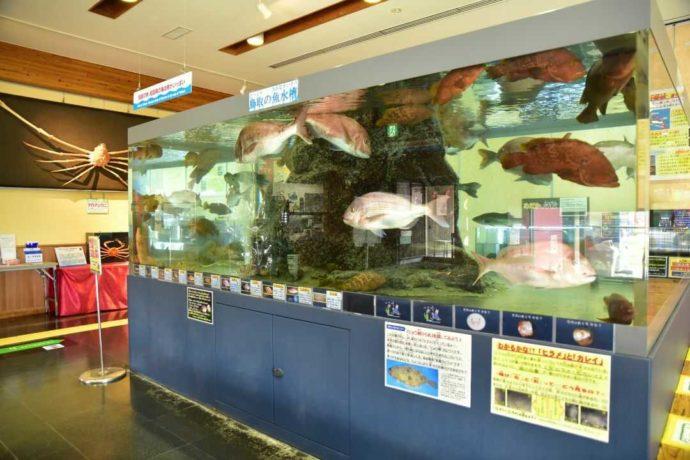 鳥取県鳥取市にあるかにっこ館で展示されている鳥取の海水槽
