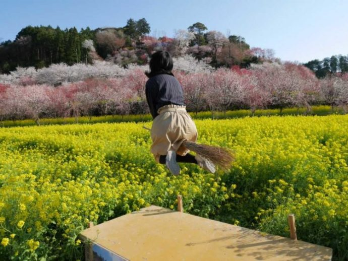 菜の花畑の中にあるジャンプ台でほうきにまたがり飛ぶ女の子