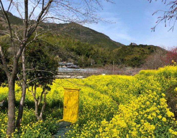 菜の花畑の中に置かれた黄色くてかわいいドア