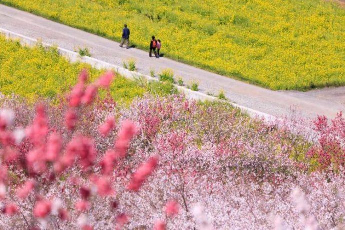 高知県「西川花公園」の展望台からの眺め