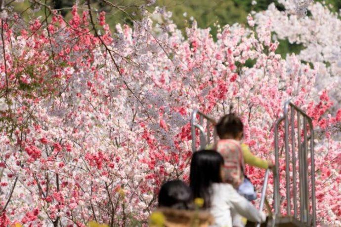 西川花公園の滑り台で遊ぶ子どもたちと美しい花