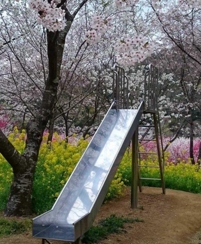 高知県香南市にある「西川花公園」の滑り台と花