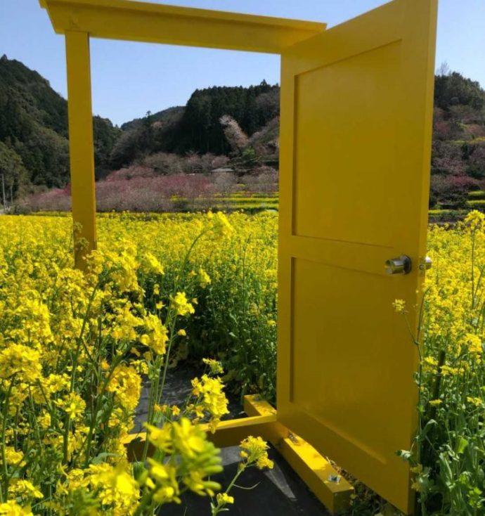 高知県香南市にある「西川花公園」にイベント期間中のみ置かれていた黄色いドア
