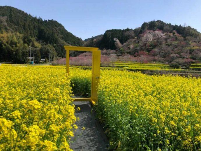 菜の花畑の中に置かれている黄色のドア