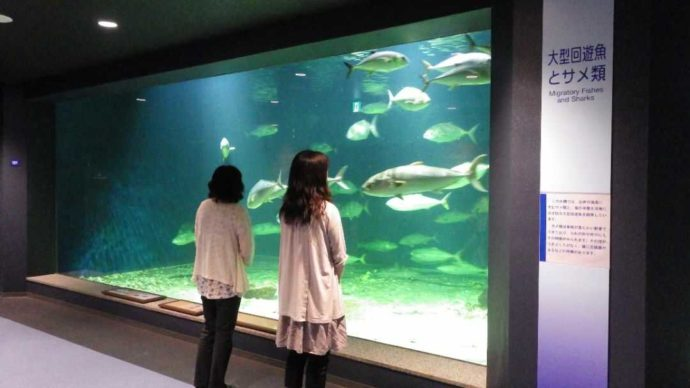 京都大学白浜水族館の大水槽