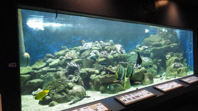 京都大学白浜水族館でたくさんの魚が泳ぐ水槽
