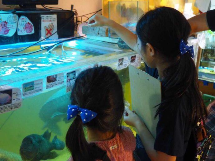 花園教会水族館で餌やり体験をする女の子たち