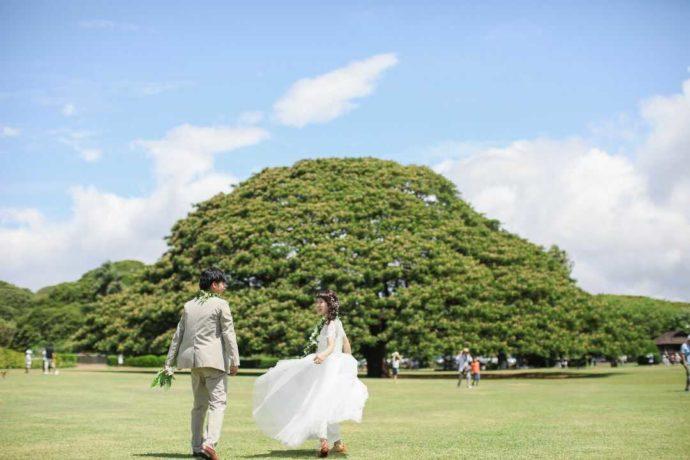 リノハワイの大きな木の近くでのウェディングフォト