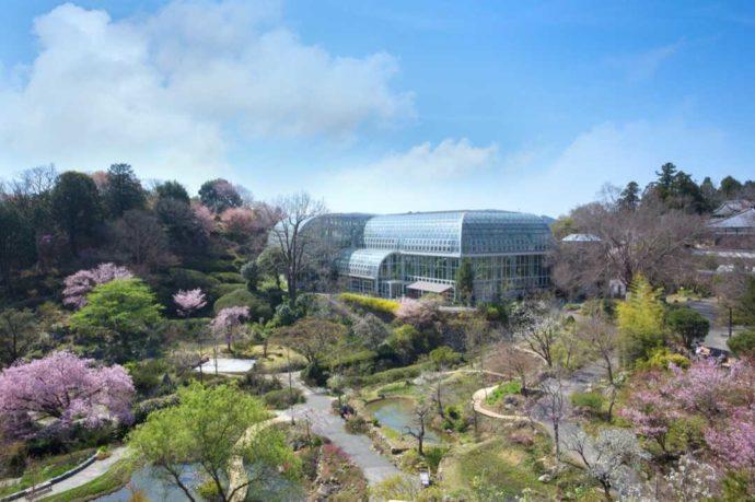 桜が咲き誇る南園の50周年記念庭園