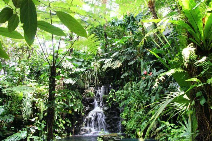 高知県立牧野植物園のジャングルのような温室