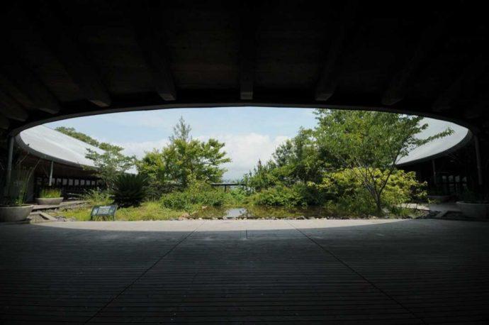 牧野博士ゆかりの植物を植栽している「牧野富太郎記念館展示館の中庭」