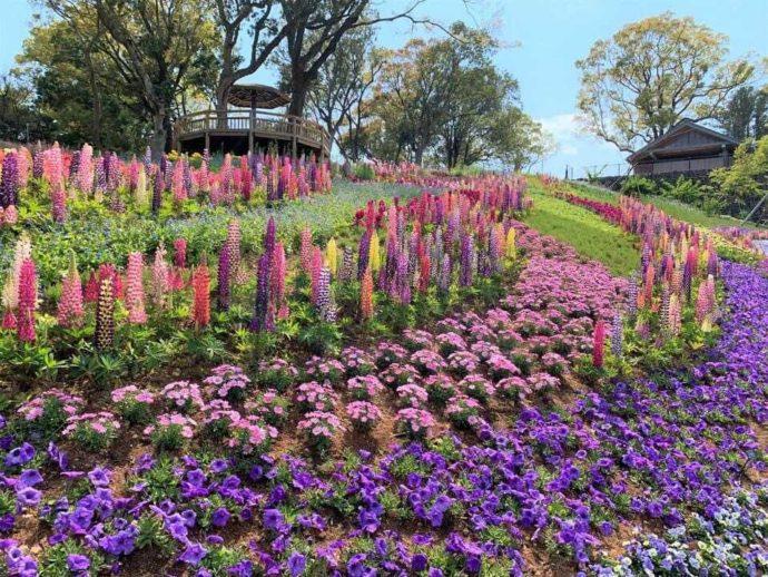 こんこん山広場で開催される「春のフラワーショー」