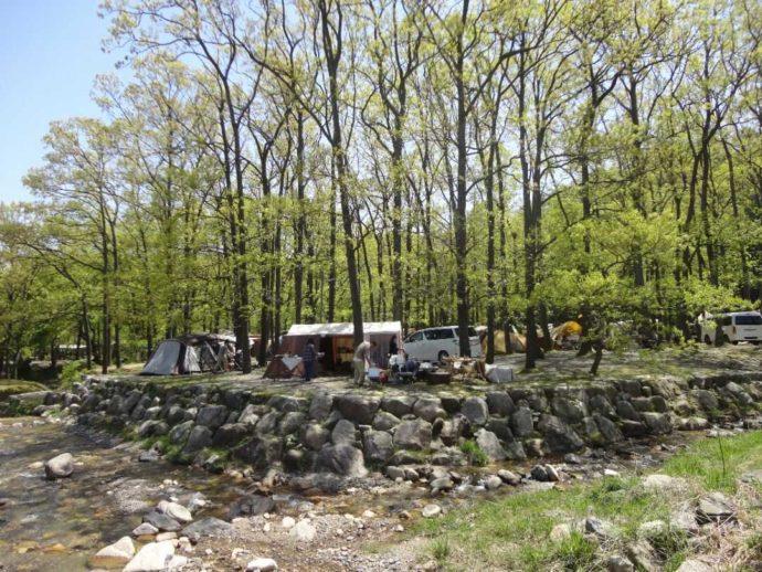 「マキノ高原」のキャンプ場林間サイトでオートキャンプやテント泊を楽しむ人々