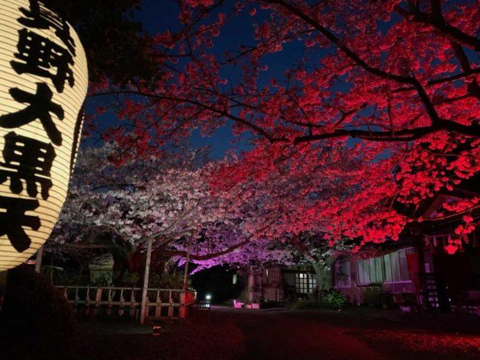 桜祭り期間中のライトアップ光景