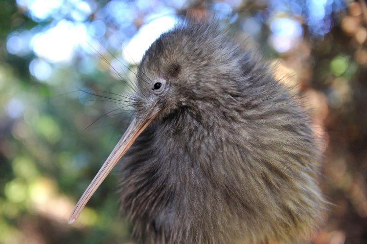 MAPPLE Activity Onlineのニュージーランドツアーで出会った動物