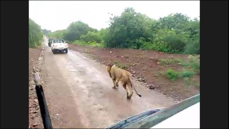 MAPPLE Activity Onlineのアフリカツアーで野生動物と遭遇