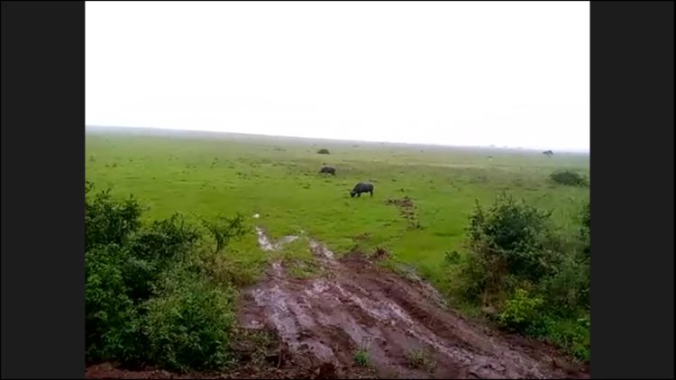 MAPPLE Activity Onlineのアフリカツアーで見られる大自然