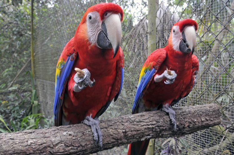 MAPPLE Activity Onlineのベリーズツアーで見られる南国の鳥