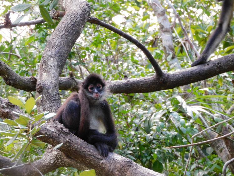 MAPPLE Activity Onlineのベリーズツアーで遭遇した野生動物