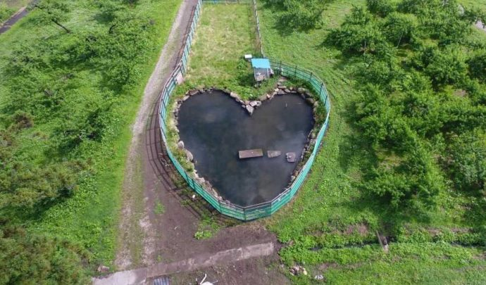 森のガーデンまるせい果樹園の園内にある恋愛スポットハート型の池