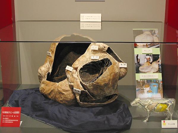 牛の博物館で見られる牛の胃の標本