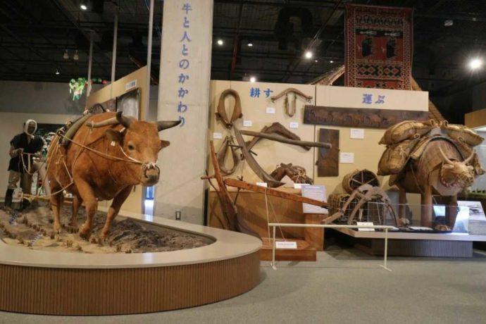 牛の博物館の「牛と人のかかわり」働く牛の様子
