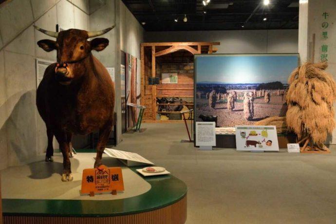 牛の博物館「牛の里前沢」の肥育牛剥製