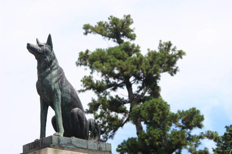 矢奈比賣神社の歴史・見どころについて