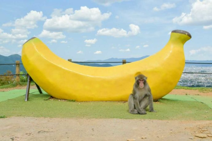 嵐山モンキーパークいわたやまの巨大バナナとサル