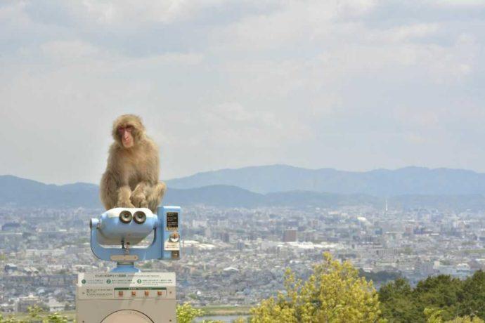 嵐山モンキーパークいわたやまの展望台から見える京都市とサル