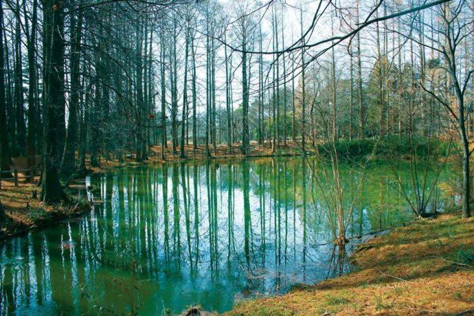 大阪市立長居植物園の冬の小池