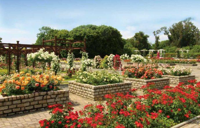 大阪市立長居植物園のバラ園