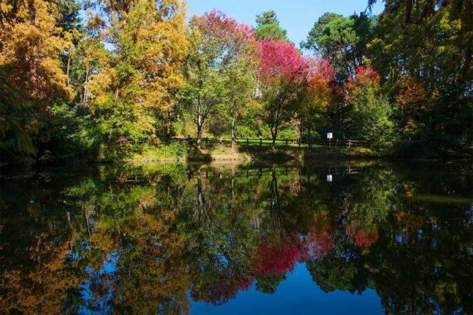 大阪市立長居植物園の小池周辺の紅葉