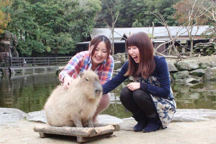 長崎県西海市にある「長崎バイオパーク」のカピバラと触れ合う利用者