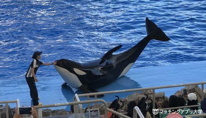 名古屋港水族館でのデートプラン3つを紹介!