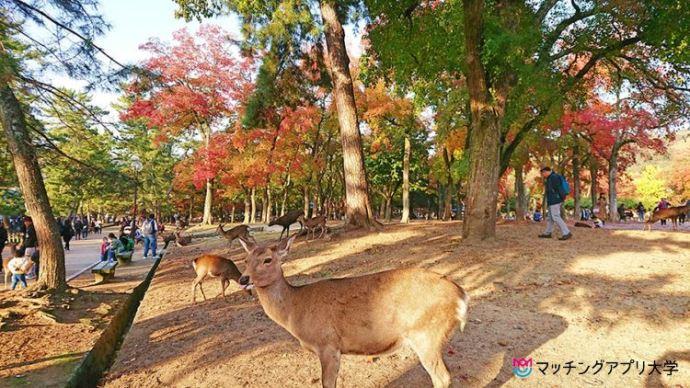 奈良公園でピクニックデート