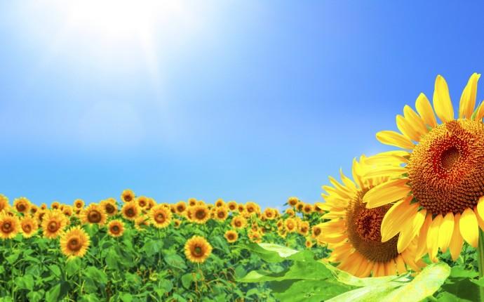 夏の風景のイメージ