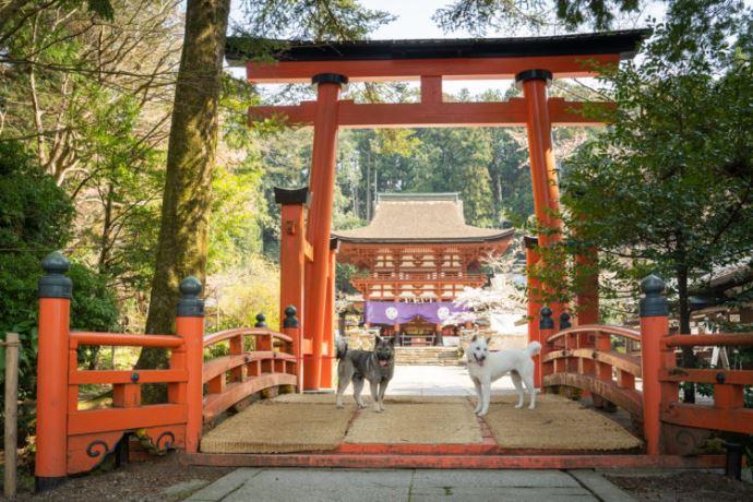 丹生都比売神社では毎月何組くらい神前結婚式を執り行っていますか