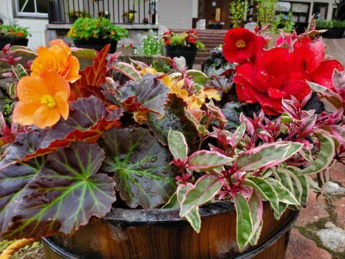 ピクニックガーデンで見られる植木鉢のお花