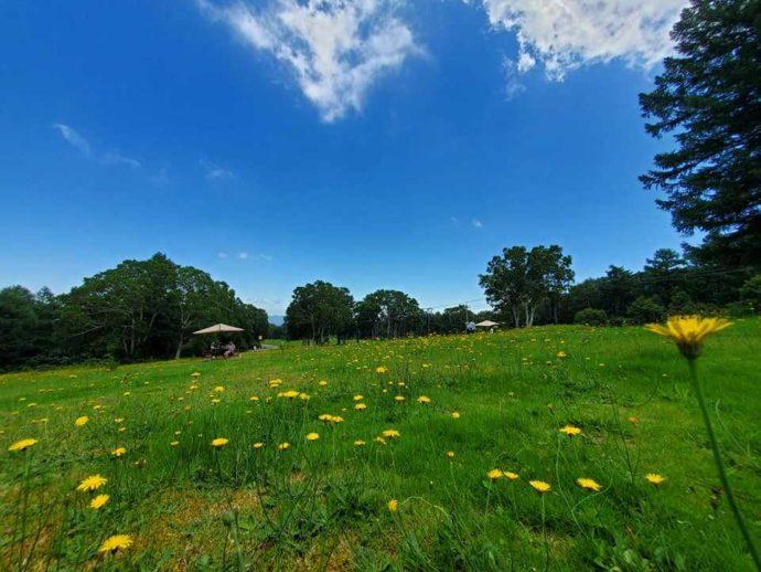 タンポポが咲く上ノ平高原のピクニックガーデン