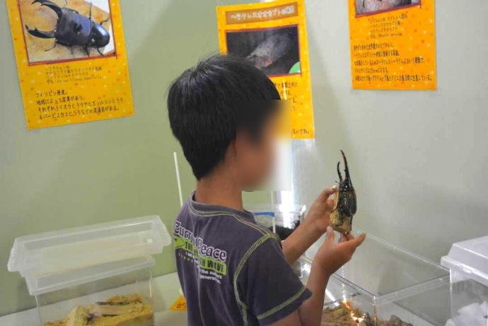 島根県益田市にある島根県立万葉公園オートキャンプ場で行われた昆虫展示会の様子